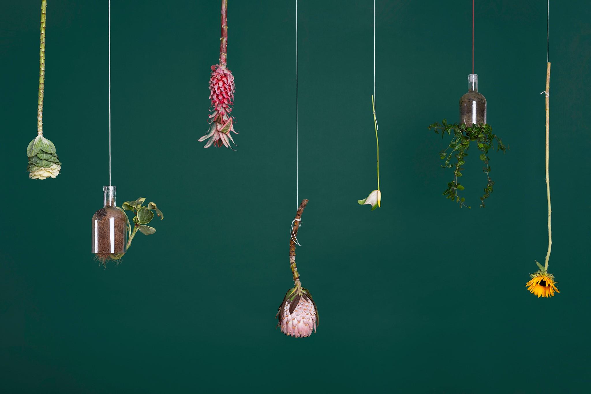 fluxus-projet-be-vegetal-scene